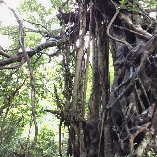 大きな樹の下で思うこと