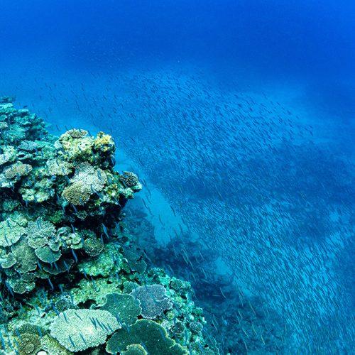 加計呂麻島シュノーケリング:ようこそサンゴ礁ワールドへ