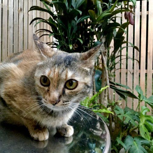 加計呂麻的新型コロナ生活、猫にとってはグルメ生活?