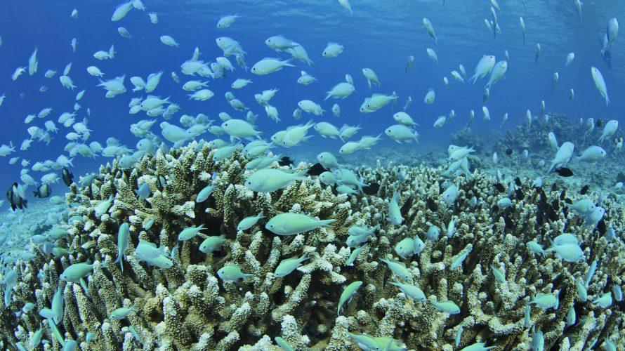 加計呂麻島シュノーケリング:海の中は刺激と癒しに溢れ、知的好奇心がくすぐられる場所なのである