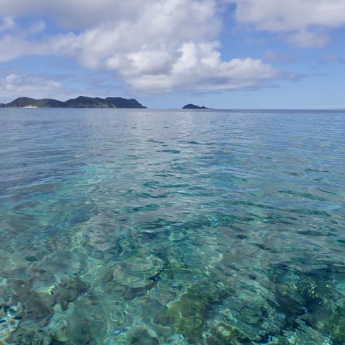 加計呂麻島ビーチランチ:海の恵みが飛び込んでくるの巻