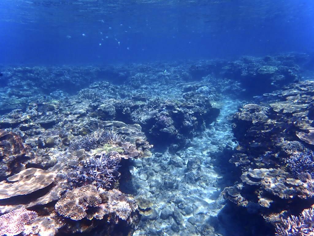 透明度のよい外洋の珊瑚礁。